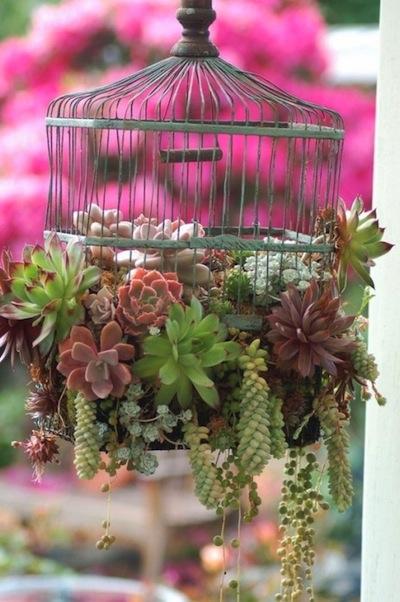 succulents-in-repurposed-bird-cage